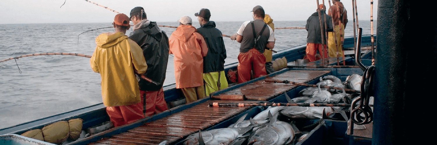 Imports, exports and distribution of fishing products: salmon, codfish and monkfish | ender