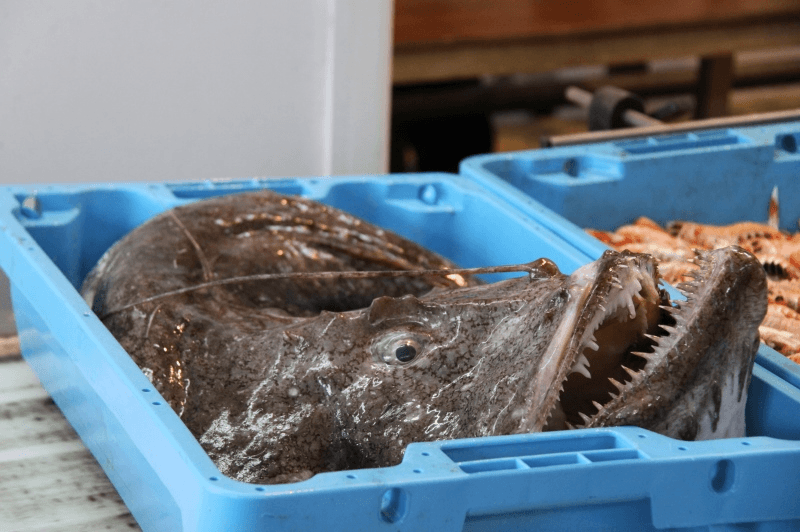 Fresh monk fish ready to distribution | Imports, exports and distribution of fishing products | ender